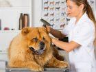 A kutyakozmetikus tanfolyam elvégzése után tisztában leszel a szőrtípusokkal, és kezelési technikáikkal.