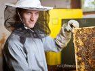 A méhész tanfolyam során elsajátíthatod a méhek helyes tartásának módját.