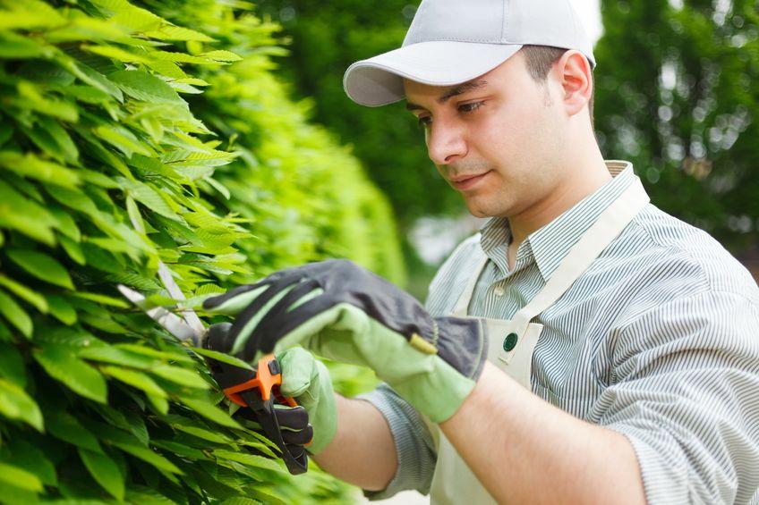 фото и картинки садовник может
